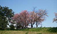 2011-05-25 12.05.42.jpg